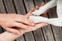 Katra saimnieka pienākums – spēkā stājas noteikumi par obligāto suņu čipēšanu