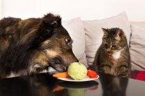Dārzeņi suņa un kaķa bļodiņā – jo vairāk krāsu, jo labāk!