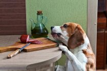 Septiņi veidi, kā saimnieks nepareizi baro savu suni