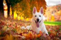 Desmit veselīgākās suņu šķirnes