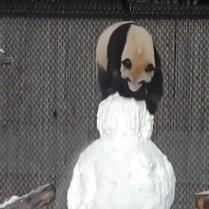 ВИДЕО: А панда против снеговика!