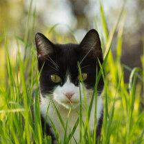 Зачем стерилизовать кошек?