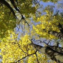 C 15 апреля в Риге вводится временный запрет на вырубку деревьев