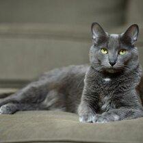 10 пород кошек, о которых вы, возможно, даже не слыхали