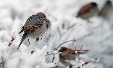 Piektdienas rītā Latvijas ziemeļaustrumos gaiss atdzisis līdz -22 grādiem