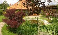 Foto: Sakoptākās lauku sētas un pilsētas dārzi Cēsīs
