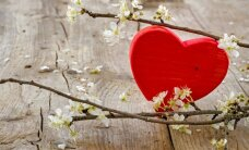 Stipras, mīlošas un dzīvesgudras – 12 mammu stāsti
