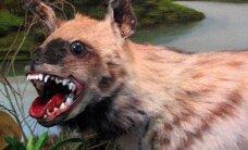 Jauns stulbings: Slikti izbāzti dzīvnieku līķi