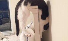 'Problēmu bērns' Kitija – rotaļīgā kaķenīte, kas vienmēr iekuļas nepatikšanās
