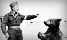 Atskats vēsturē: Poļu armijai Itālijā munīciju pienesa Sīrijas brūnais lācis