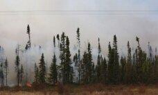 Gotlandē plosās bīstams mežu ugunsgrēks