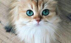 Elegantā Smūtija – kaķenīte ar vasarīgu vārdu un smaragdzaļām acīm