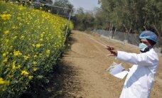 Eiroparlaments pieprasa saglabāt esošo regulējumu ĢMO pārdošanai