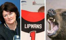 24 мая. Травля главы СГД, скандальное интервью с Липманом, заблудившийся медведь