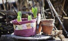Savs piemājas dārziņš – ko ņemt vērā, veidojot pirmās dobes