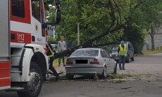 Foto: Stiprs vējš automašīnai uzgāž koku