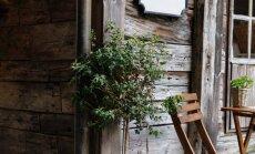 Latvieši – koka māju cienītāji. Stāstu kolekcija ar omulīgiem namiem
