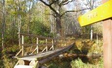 Ķirbižu meža taka ar dižozolu un burbuļojošu upīti, kur barons reiz gājis vīnu dzert