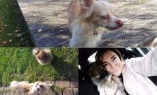 Neprāts vai labākais lēmums dzīvē: Elizabetes stāsts par mīlestības dalīšanu diviem suņiem