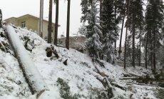 Kailcirte aiz sētas: Kaislības ap priežu meža izciršanu Sunīšos