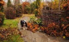 Kas darāms dārzā līdz 13. novembrim un gada beigām?