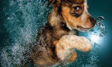 Suņu fotogrāfs pierāda - kucēni zem ūdens ir divtik mīlīgi