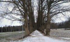 Dabas aizsardzības pārvalde publicējusi Latvijas skaistāko koku aleju aprakstus