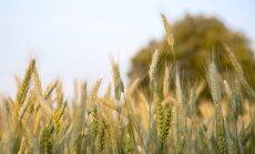 Прогноз урожая этого сезона немного снижен; сев озимых задерживается