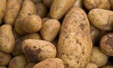 Rumāņi un holandieši masveidā uzpērk Latvijas kartupeļus; pavasarī varētu būt deficīts
