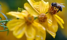 Kukaiņu nakts Slīteres Nacionālajā parkā – nakts lidoņu iepazīšana un to gaismošana