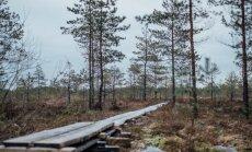 Ziemīga pastaiga pa apsarmojušo Niedrāju – Pilkas purva taku uz skatu platformu