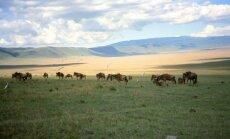 Botsvanā dabas daudzveidības saglabāšanai aizliegs komerciālās savvaļas medības