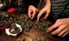 ASV likumsargi pārtvēruši 1,8 tonnas marihuānas, kas paslēpta neīstos laimos