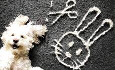 Skaisti vai dīvaini: saimniece no sava suņa spalvām rada mākslas darbus