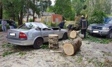 Foto: Mežaparkā milzīga papele uzgāžas četriem auto