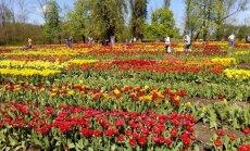 Lietuvas Holande – greznā tulpju paradīze Burbišķi. Ko tur apskatīt?