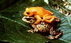 Septiņas izmirušas dzīvnieku sugas