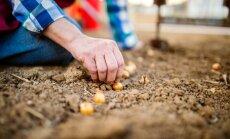 Kas darāms dārzā no 18. līdz 24. aprīlim?
