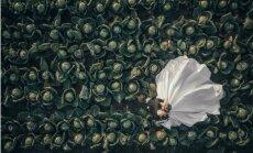 Ievērību gūst latviešu pāra kāzu foto kāpostu laukā