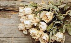 Izkaltētu ziedu pulveris: smaržojošs palīgs cīņai ar paklāja traipiem