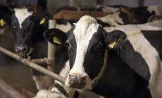 Еврокомиссия предоставила латвийским молочным хозяйствам 10 млн евро