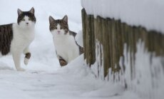 Толщина снежного покрова в Резекне увеличилась до 24 см