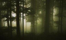Kurzemes svētie meži: unikāla vieta, kur mirušo gari sarunājās ar dzīvajiem pēctečiem