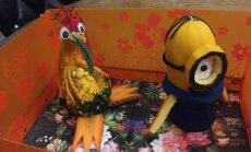 Palepojies 'Delfi Aculieciniekam' ar savu Miķeļdienas dārzeņu kompozīciju