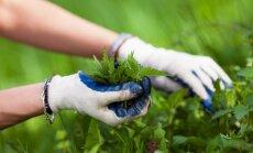 Kā pagatavot nezāļu vircu dārza veselībai?