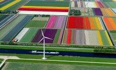 Pēc pārrunām Maskavā Ungārija pārtraukusi sertificēt Nīderlandē izaudzētos ziedus, ziņo 'Rosseļhoznadzor'