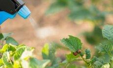 Negantnieki dārzā: vērtīgi ieteikumi dažādu kaitēkļu iznīdēšanai