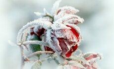 Arī ziemā dārzs var būt skaists - elementi, idejas un ieteikumi dārzkopim iesācējam