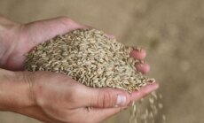 Pārtikas kviešu cena Latvijā jūnijā salīdzinājumā ar laiku pirms gada kritusies par 20%