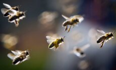 ES aizliedz bitēm kaitīgos pesticīdus